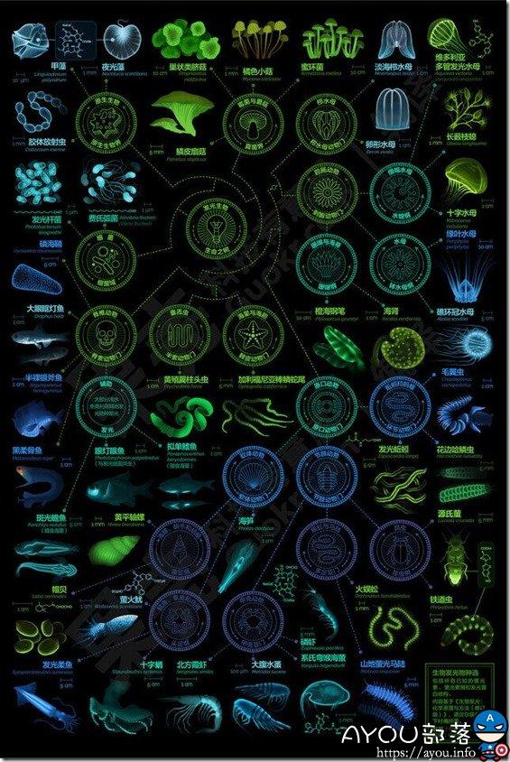 【信息图】发光的生物,都有哪些?转